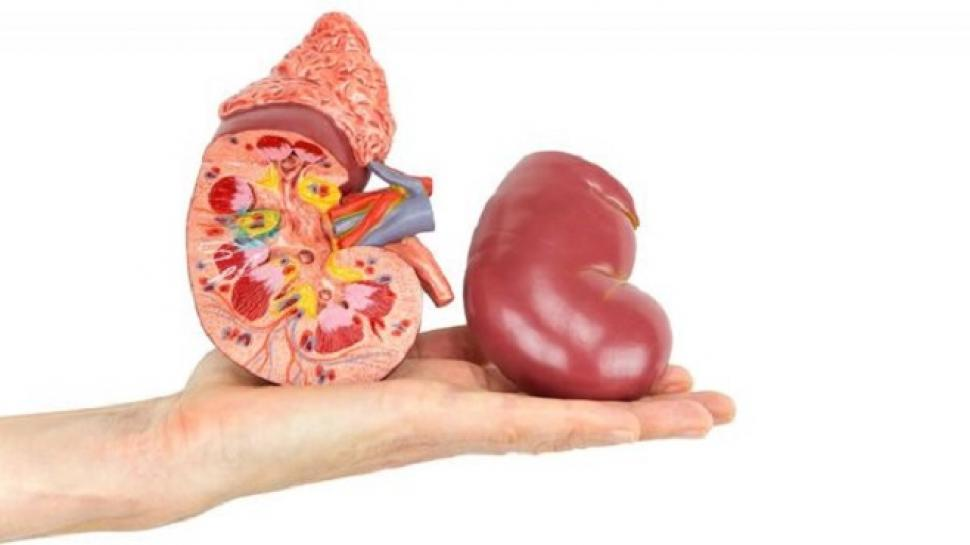 Estos son los alimentos que más dañan tus riñones - Minuto Neuquén