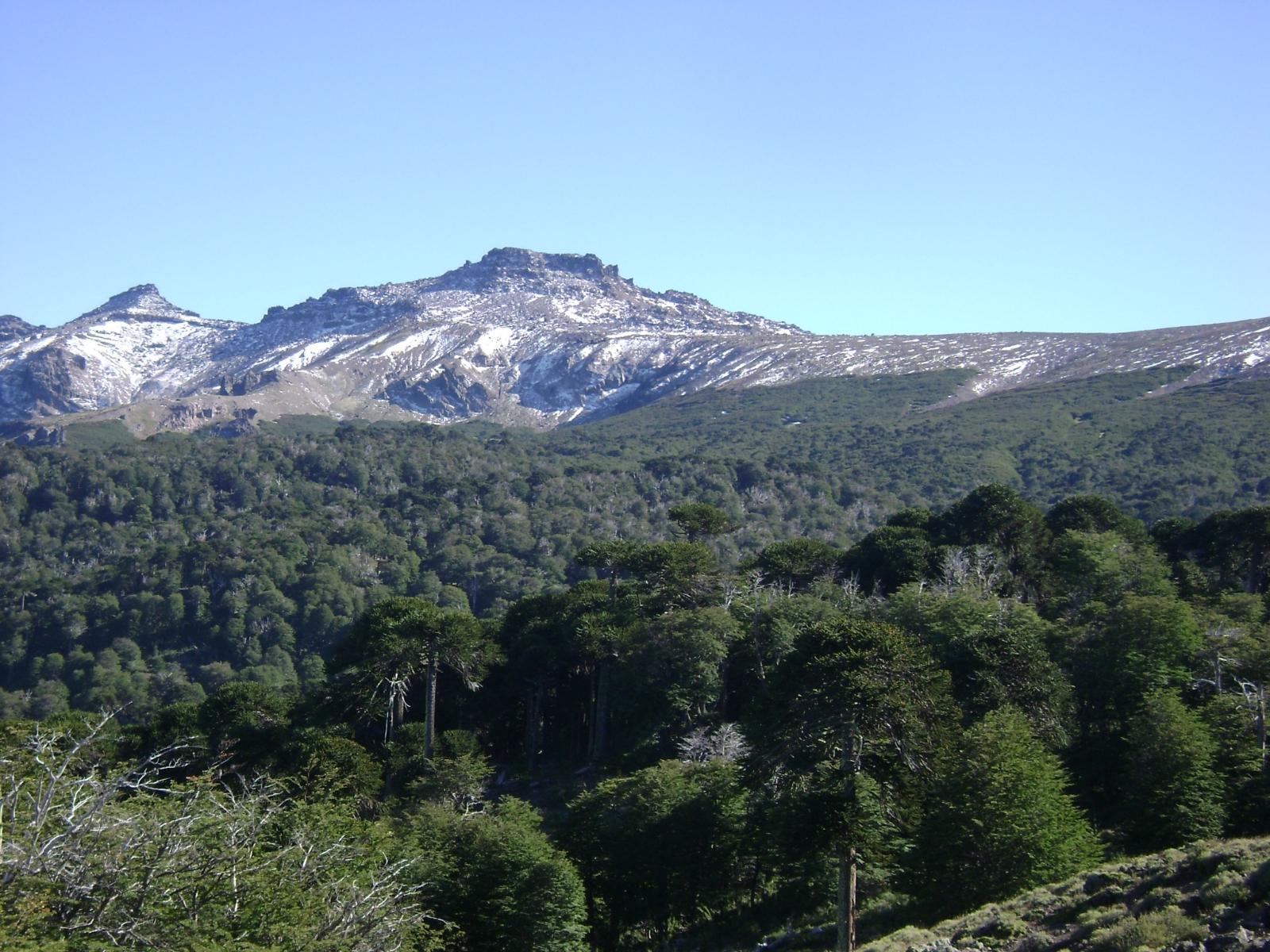 Resultado de imagen para ley de bosques neuquen